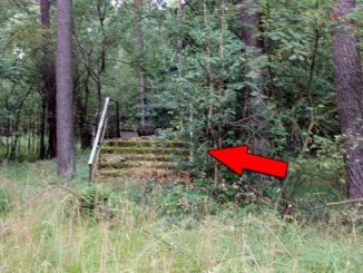 A mysterious set of stairs in the woods