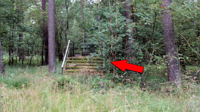 Stairs in the Woods Phenomenon Is Freaking People Out - Slapped Ham