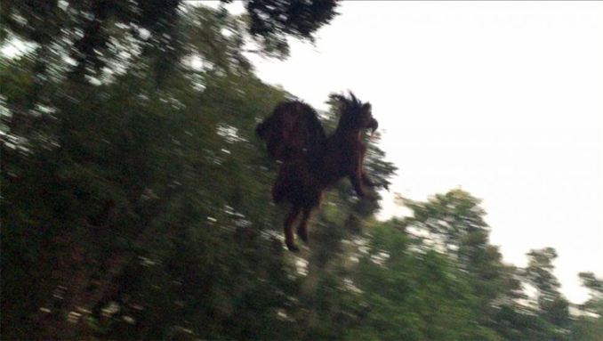 2015, David Black Jersey Devil photo captured in Galloway