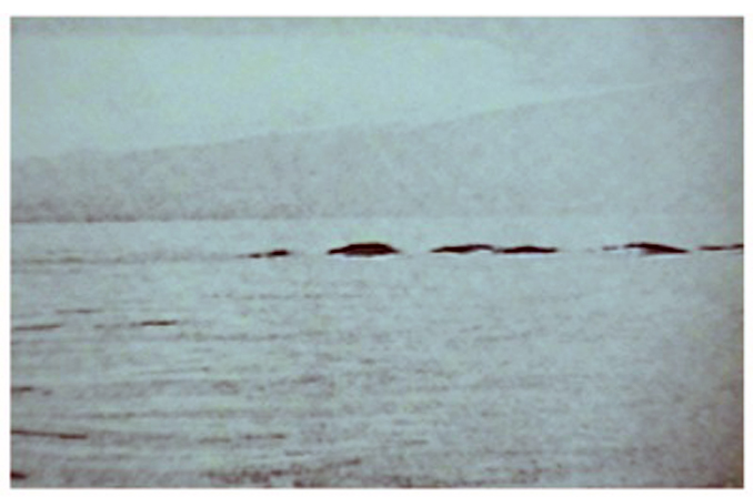 Ogopogo Lake Monster by Ed Fletcher is a real cryptid encounter