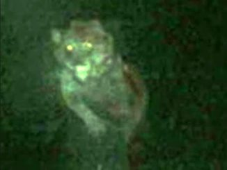 A sighting of the Michigan Dogman is one of many real cryptid encounters caught on camera