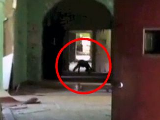 Freaky Cryptid Sightings Caught on Camera