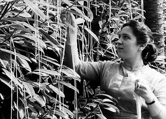 Black and white photo of a woman picking spaghetti from the famous spaghetti tree.