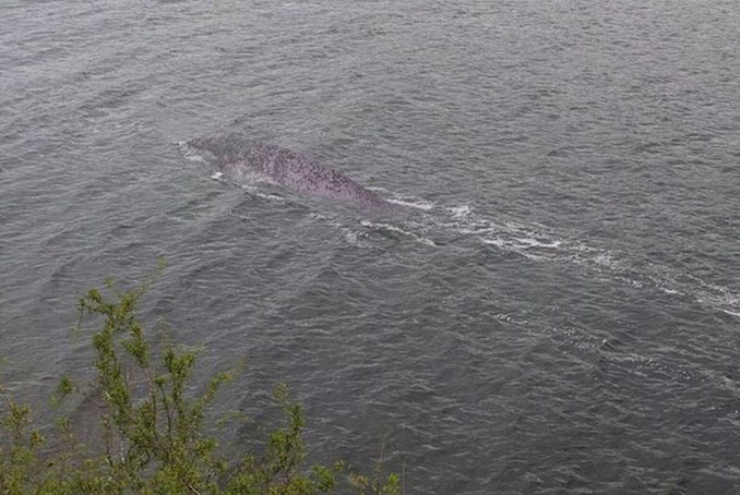 In this series of unexplained photos, a strange creature that resembles the Loch Ness Monster has been spotted.