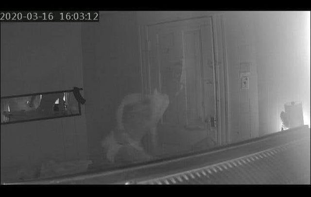 Scary headless entity caught on security camera.