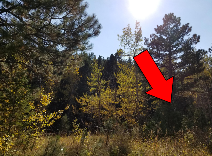 Scary photo in the woods reveals creepy figure.